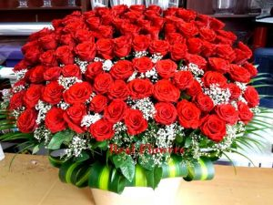 100 Red Rroses