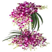 productWith many numerous historical significances of Orchids, we give weightage to its attribute of being the most popular ornamental flower as we decorate them and place them in an arrangement that will mesmerize you. An arrangement replete with Orchids that is 3 feet tall and has lovely long greens attached to it to make it further endearing. Buy this for an exceptional occasion to make the heads turn as you carry this to the aisle for the couple!