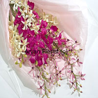 productGather the magentas, bring in the pinks and throw in the whites, this bunch of orchids forms are great party. Enhanced with the green of fresh leaves and extra long stems, this arrangement is an easy choice for gifting for all occasions. The bouquet comes wrapped in fine paper to add to the look. Light weight and easy to carry, it's also efortless to display in the house. Keep it easy, keep it elegant.