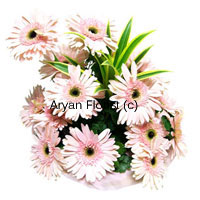 productSomewhere between red and white, the pink gerberas (fifteen in number) are an endearing way to express feelings. The hint of green perfectly complement the pink like you complement each other. This is definite way of making that distinctive mark in your lover's heart and soul. So embark upon this journey of love with a chariot of pink gerberas away from the worldly affairs, just the two of you! What are you waiting for? order now!