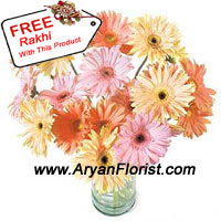 productSend the most cheerful boost of color to your brother with this bunch of 24 mixed color gerberas. Fresh from the farm, this arrangement looks fresh and sunny with the bright colors, seasonal fillers, and green leaves. The wrapping around the bunch firmly holds it together. This medium size bunch looks great in any corner of the room and is delivered with a free Rakhi for Raksha Bandhan.