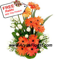 productBrighten your brother�s day with a pretty basket of white roses and gerberas and a free Rakhi. Handpicked and specially assorted, the fragrant flowers are arranged in the most natural manner to highlight its beauty. The elegant Rakhi is designed with soft threads, beads, embellishments and fancy trinkets to form the most attractive design. Send it to your brother and delight him with this beautiful present.