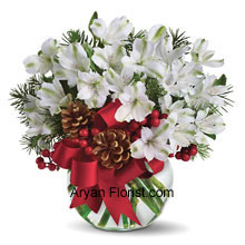 Perfectly white alstroemeria blossoms come to you arranged in a vase! This is further adorned with holiday trim and lovely ornamental dahlia that will make you buy this. With affection and love buy this white color arrangement and spread peace which is symbolic of love and respect. The festive spirit will be maintained with the lovely crimson colored ribbon that adorns the entire arrangement and looks very pleasing. Place your order now and see the magic of whites! (Please Note That We Reserve the Right to Substitute any Product with a Suitable Product of Equal Value in Case of Non-Availability of a Certain Product)